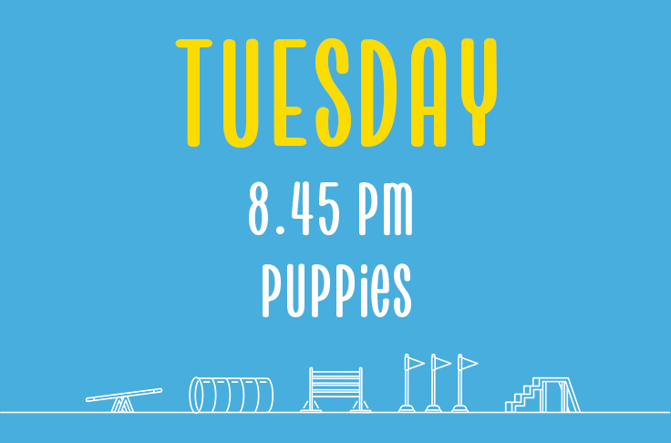 Read more about the article Tuesday<br> 8.45pm<br> Puppies <br> Laura