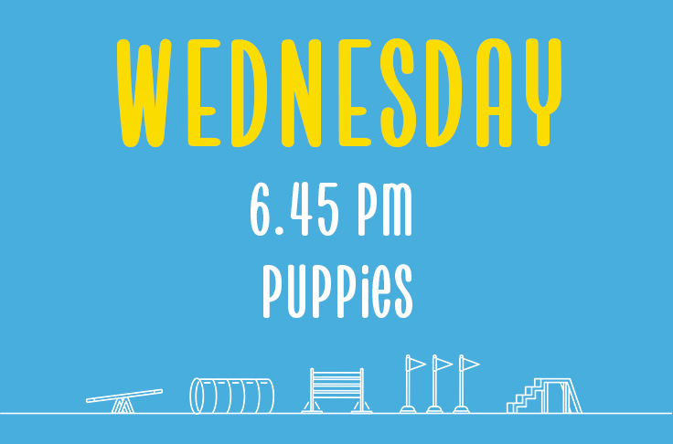 Read more about the article Wednesday<br> 6.45pm<br> Puppies <br> Laura
