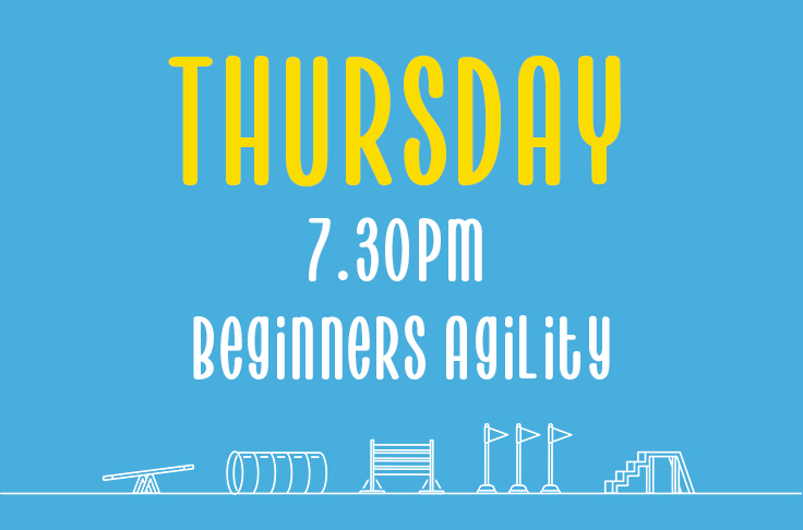 Thursday <br> 7.30pm – 8.30pm <br> Beginners Agility<br>Rebecca Willicombe – Hydropaws