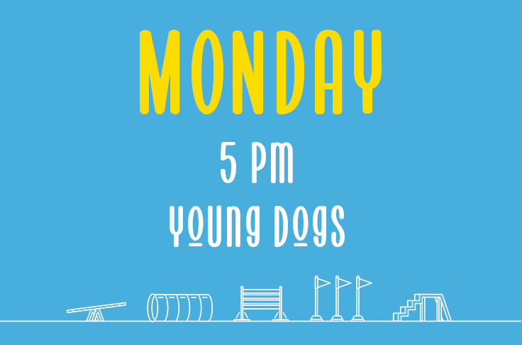 Read more about the article Monday<br> 5pm<br> Young Dogs <br> Nicola Wildman